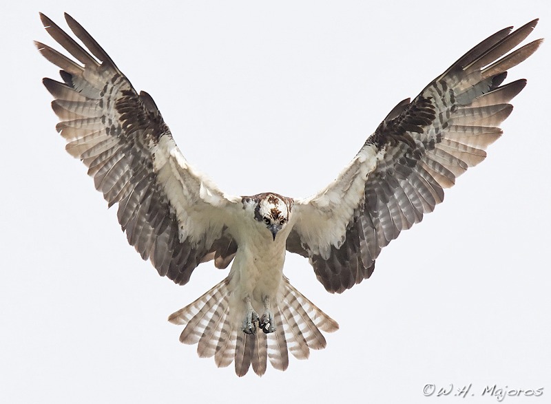 Secrets Of Digital Bird Photography - Syncing a videos frame rate with a birds wings does something amazing