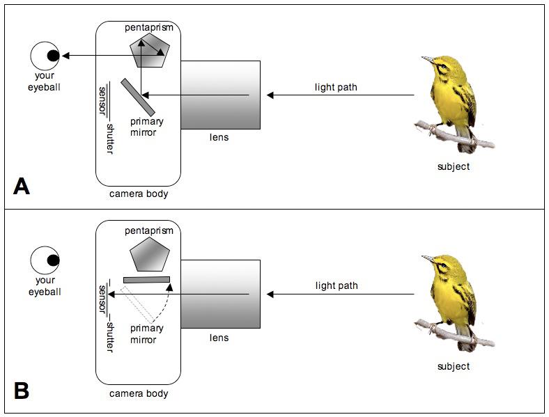 Secrets Of Digital Bird Photography