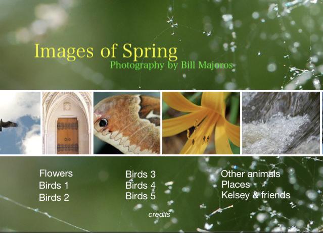 Slide Show Of Some Of My Bird Photos >> Secrets Of Digital Bird Photography